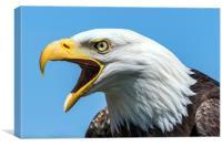 bald eagle, Canvas Print