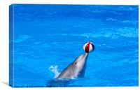 dolphin display, Canvas Print