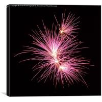 Pink Fireworks - Night time, Canvas Print