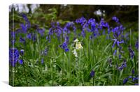 The White Bluebell, Canvas Print