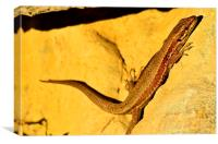 Lizard, Canvas Print