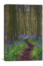 Walk Through Bluebells at Ashridge