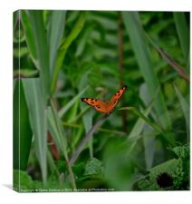 Orange Butterfly...., Canvas Print