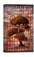 Life-sized Bonsai, Canvas Print