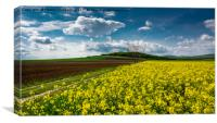 spring on the meadow, Canvas Print