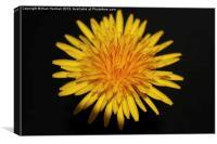 Dandelion Flower, Canvas Print