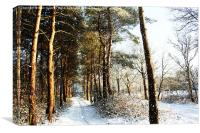 Forest Snow Scene, Canvas Print