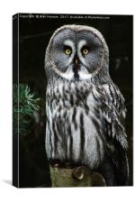 The Great Grey Owl, Canvas Print