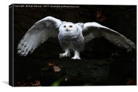Snowy Owl With Open Wings, Canvas Print