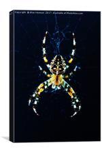 European Garden Spider, Canvas Print