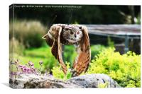 Owl In Flight, Canvas Print