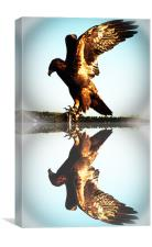 Reflections of a Golden Eagle, Canvas Print