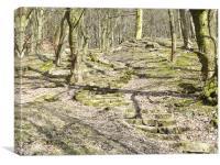 Rivington Woods Steps, Canvas Print