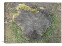 Tree Stump, Canvas Print