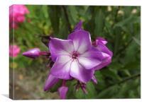 A flower in full blossem, Canvas Print