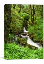 Bluebell waterfall, Canvas Print