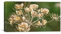 Autumn seeds, Canvas Print