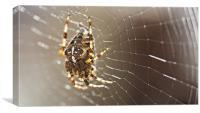 Knees of an arachnid, Canvas Print