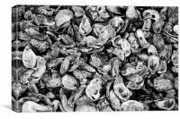 Oyster Shells, Canvas Print