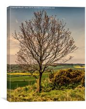 Tree With A View Pinchinthorpe, Canvas Print