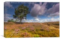 North Yorkshire Moors, Canvas Print