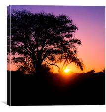 Sunset in the Kalahari, Canvas Print