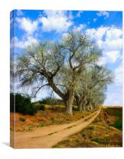 Trees along a dirt Road, Canvas Print