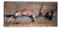 Fighting Oryx, Canvas Print