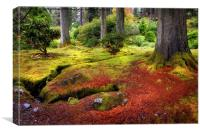 Colorful Carpet of Moss in Benmore Botanical Garde, Canvas Print