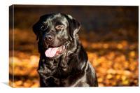 Black Labrador Retriever in Autumn Forest, Canvas Print