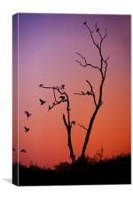 Mysterious Sunset with Solo of the Tree and Choir , Canvas Print
