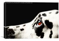 The Amber Eye. Kokkie. Dalmation Dog, Canvas Print