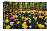 Colorful Corner Of The Keukenhof Garden 1. Tulips