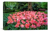 Tulip Marvel among the Forest. Keukenhof. Netherla