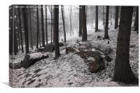 Dark Woods. Series In Mysterious Woods            , Canvas Print