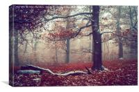 First Snow in Fall Woods, Canvas Print