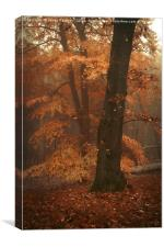Misty Woods, Canvas Print