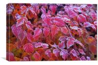 Frosty Red Leaves, Canvas Print