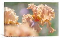Dodge City 2. The Beauty of Irises, Canvas Print