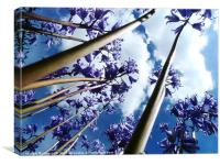 Bluebell trees, Canvas Print