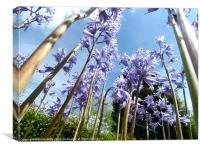 giant bluebell trees, Canvas Print