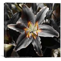 White Lily in Infra red, Canvas Print