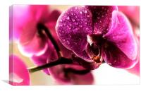 Good morning Orchid, Canvas Print