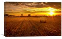 Golden Harvest, Canvas Print