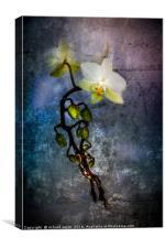 Cascade, Canvas Print