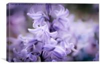 Bluebell Dreams, Canvas Print