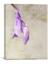 Pale Blue, Canvas Print