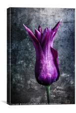 Steel Tulip, Canvas Print