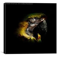 Macaw Portriat, Canvas Print