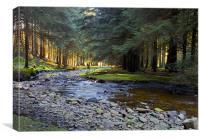 Snake Pass Woodlands, Canvas Print
